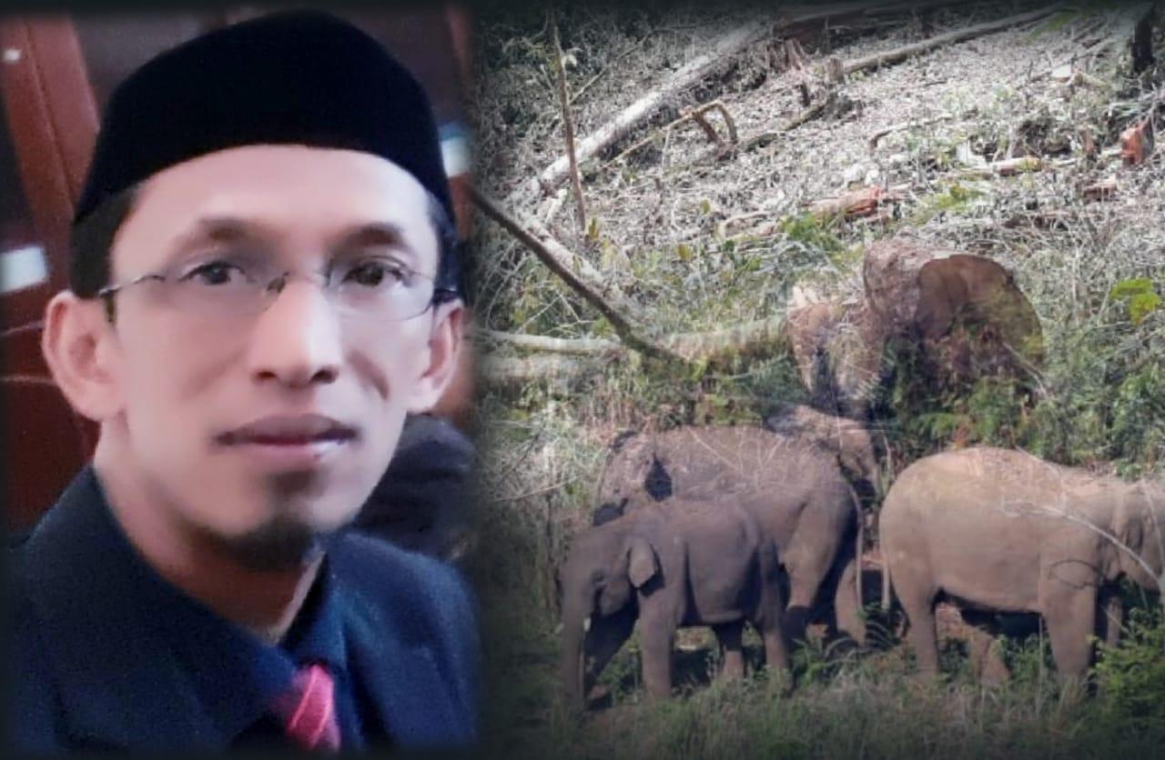 Penyebab Konflik Baru Gajah dan Manusia