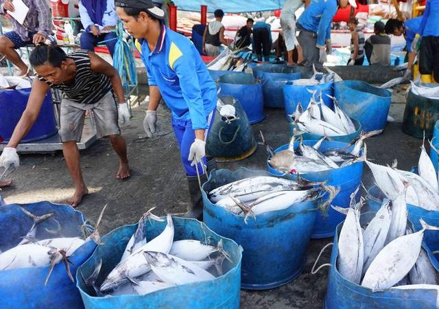 Dampak Pandemi Terhadap Perekonomian Nelayan dan Solusinya